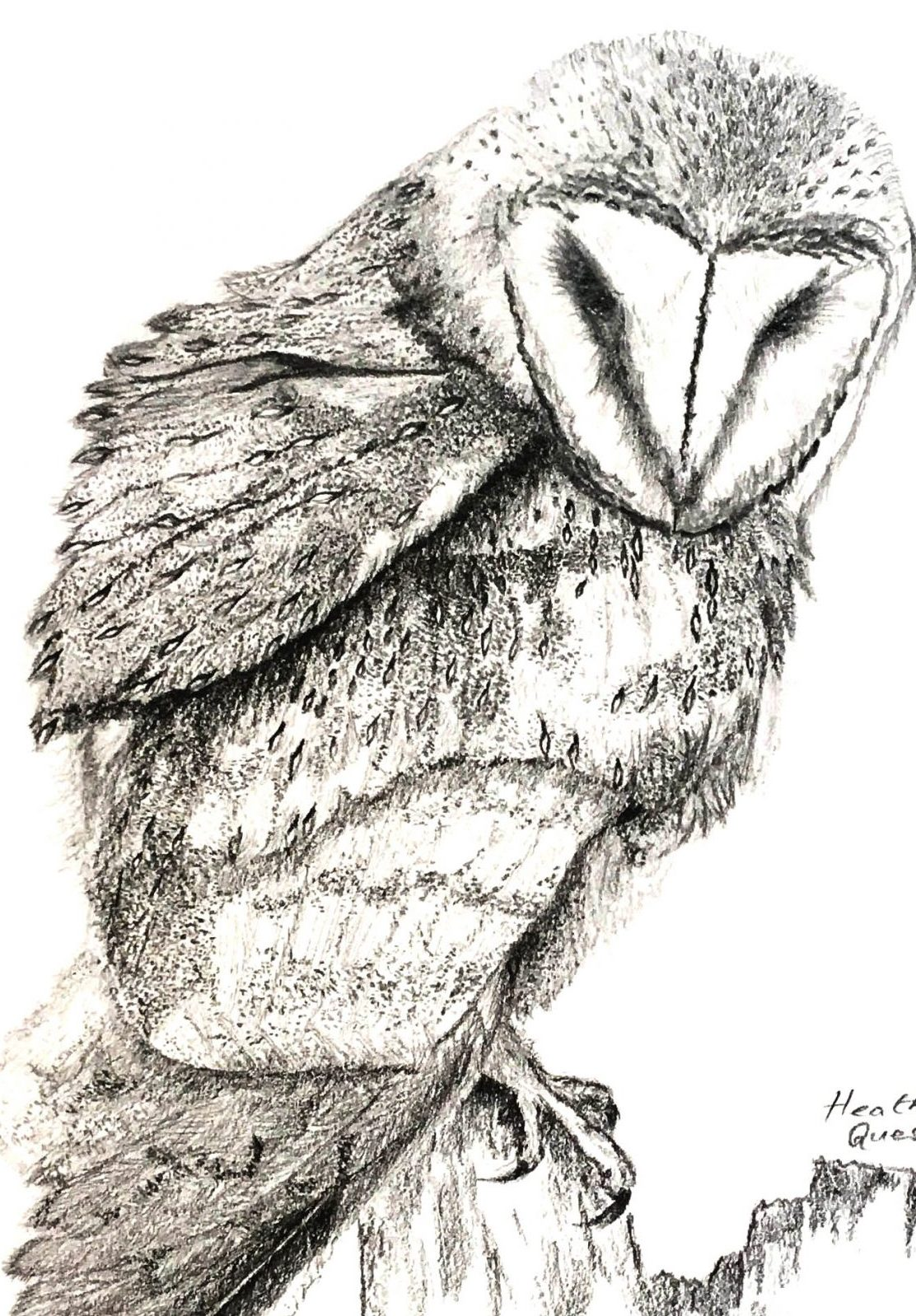 Graphite owl by H. Quest