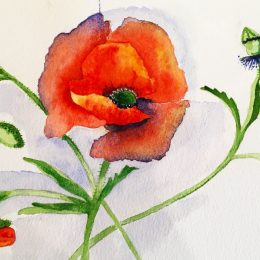 Watercolour by P.Gilpin